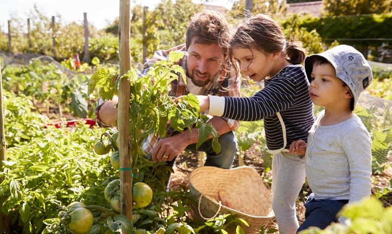 Schließlich spielt der Garten eine wichtige Rolle. Wenn Sie hier Ihr grünes Reich errichten wollen, sollten Sie ein Haus kaufen.