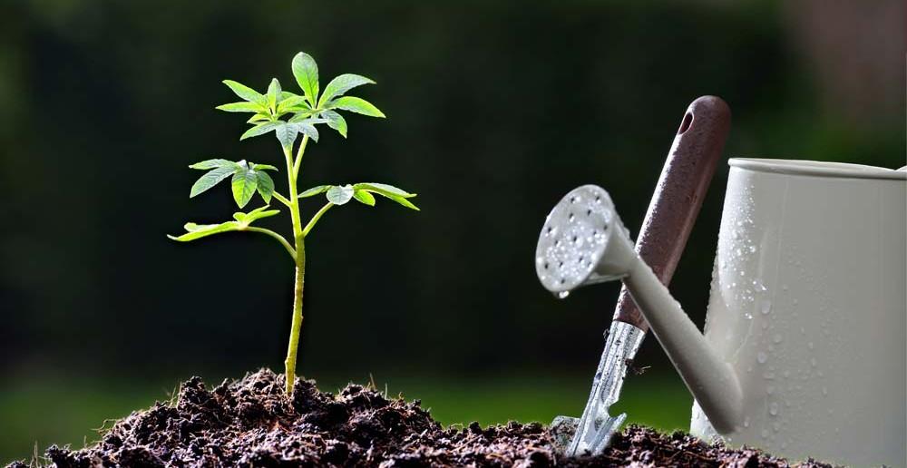"""1. Tipp für Taufgeschenke: einen Baum aus der Dose symbolisch als """"Wurzeln"""" schenken."""
