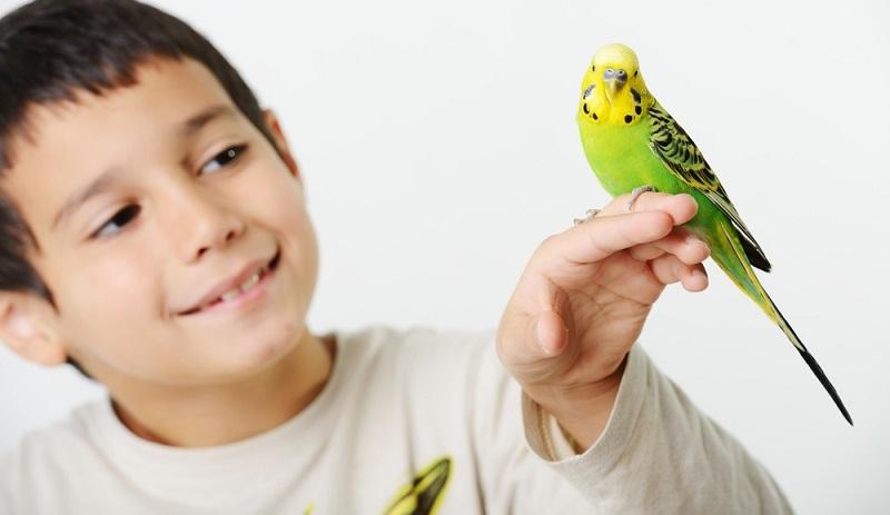 Allein die Werbung für viele Wellensittich-Futterprodukte, die die lediglich 25 Gramm leichten Vögel auf dem Produkt abgebildet zeigen, sorgt oft schon für ein wohliges Gefühl. (#06)