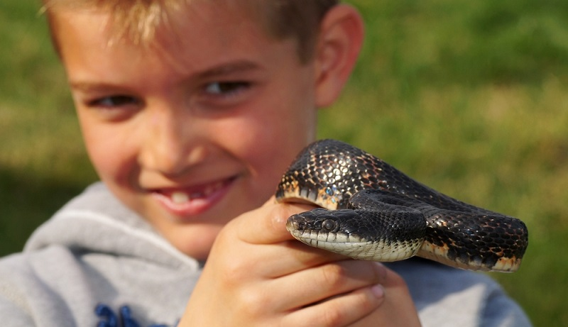 """Wenn das Kind auf die Frage """"Welches Haustier hättest du gerne?"""" mit """"Reptilien"""" antwortet, wissen die meisten Eltern vermutlich erst einmal nicht, wie sie auf diese Antwort reagieren sollen. (#07)"""