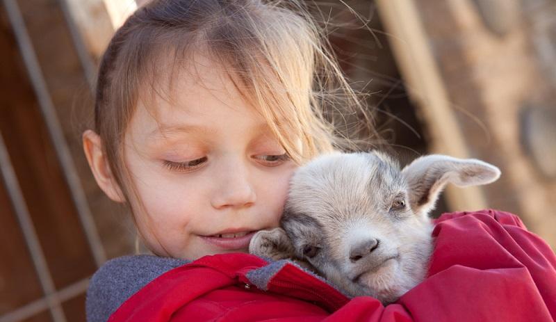 Es ist kein Geheimnis, dass sich Kinder oft positiv und in ihrer Persönlichkeit gefestigter sowie stabiler entwickeln, wenn sie mit einem Haustier aufgewachsen sind. Welches Haustier, spielt dabei erst einmal keine allzu große Rolle. (#02)
