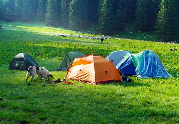 Campingplätze sind ebenfalls ein tolles Reiseziel mit dem Hund. (Foto: shutterstock - Roman Mikhailiuk)